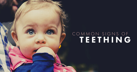 Common signs of teething graphic